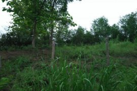 Land for Sale or Rent in Louangphrabang